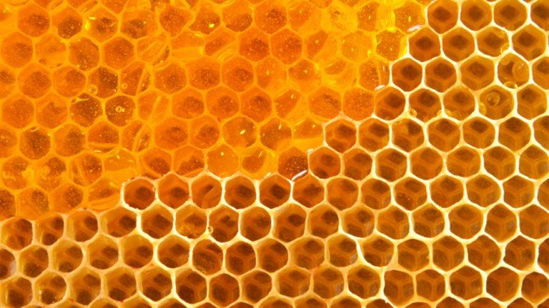 honey-laravel-8